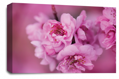 Floral Flower Wall Art Picture Pink Grey Spring Blossom Print